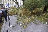 Повалені дерева, розтрощена реклама: Львовом пронісся потужний ураган