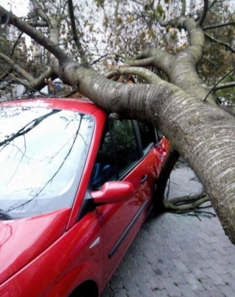 По всій Україні оголосили штормове попередження: буревій уже наробив лиха