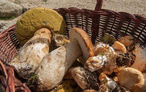 У Львові відкрили справу за фактом смерті людей в результаті отруєння грибами