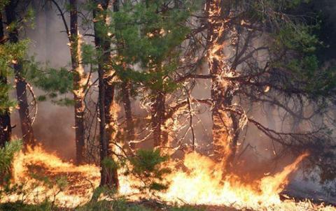 В Україні з початку року на пожежах загинули майже 1,2 тис. громадян, - ДСНС