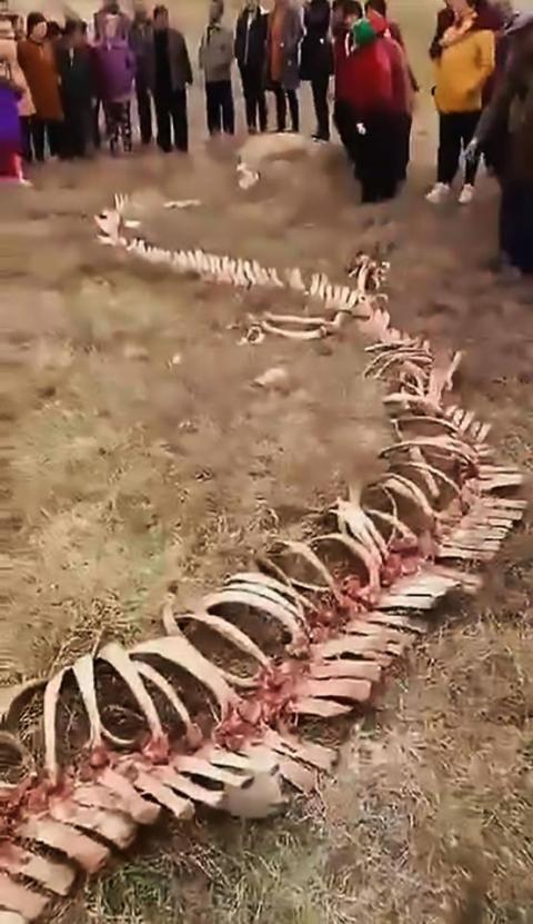 У Китаї виявили 18-метровий скелет «дракона»
