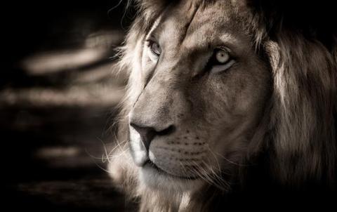 У Кривому Розі в цирку від інфаркту помер лев