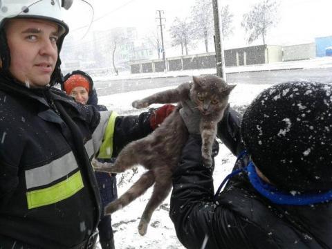 Не дали замерзнути: у Хмельницькій області рятувальники зняли з дерева кота