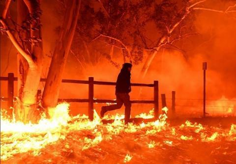 Лос-Анджелес горить: пожежа пожирає ліси, домівки і тварин