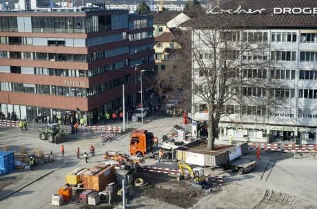 У Швейцарії пересадили 80-річний клен, який ріс на шляху нової траси