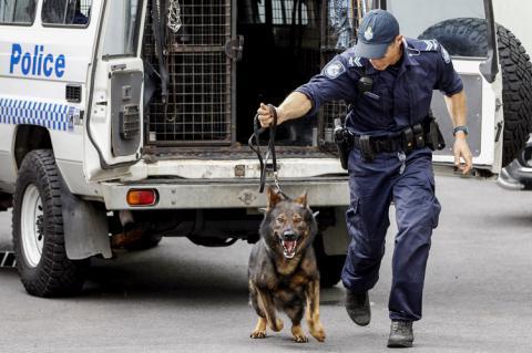 У Румунії платитимуть пенсію собакам і коням