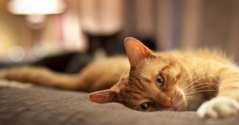 Японський готель запропонував гостям оренду кота в номер