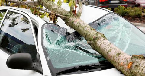 Хто відповість за дерево, що впало на авто, пояснив ВС
