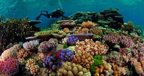 В Австралії стрілятимуть сіллю по хмарах, щоб врятувати риф