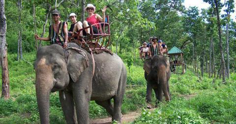 Парк у В'єтнамі отримає грант за заборону кататися на слонах