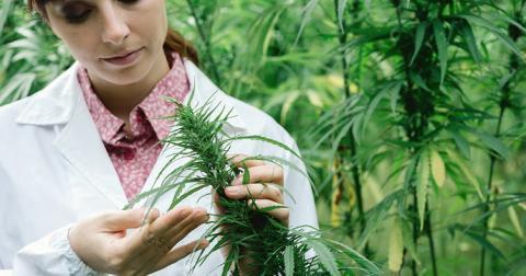 У Британії хворим дозволять зберігати ліки з марихуаною