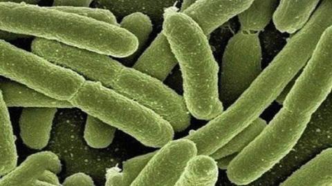 Науковці виявили у кишечнику людини бактерії, які виробляють електрику