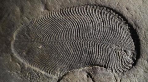 Молекула жиру допомогла зробили епохальне відкриття про вік найдавнішої тварини Землі