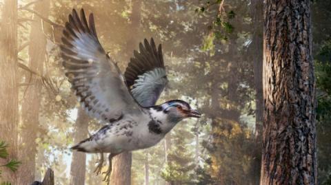 Маленькі динозаври: китайські вчені знайшли «проміжну ланку» в еволюції птахів