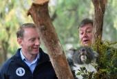 «Посли дикої природи»: п'ять коал і два вомбата переїдуть з Австралії до Англії
