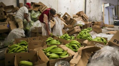 В Іспанії вилучили 6 тонн кокаїну, захованого в бананах