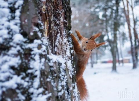 В Україні буде морозно – синоптик розповіла, яка скоро прийде погода