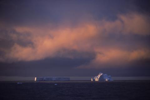 Вчені назвали причину «масового вимирання» та закликали уникнути її повторення