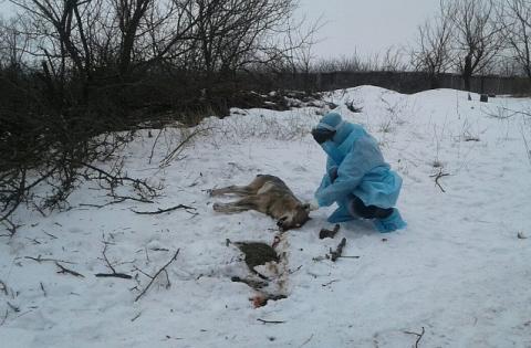Поблизу Бердянська вовк покусав людей