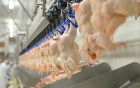 За рік Україна збільшила поставки курятини в ЄС на 54%