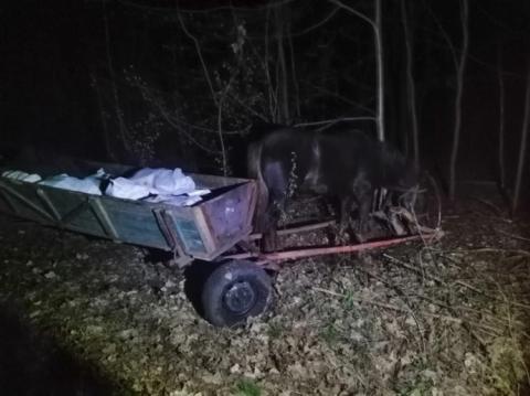Троє українців двома підводами намагались провезти до Білорусі 800 кг сала