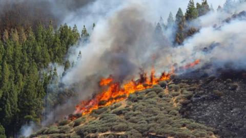 На одному з Канарських островів вирують лісові пожежі, тисяча евакуйованих