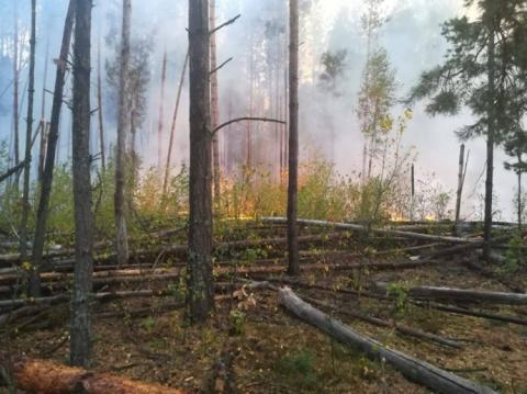 У Чорнобильській зоні вже добу гасять лісову пожежу