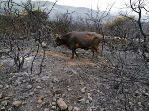 На італійській Сардинії вирують пожежі, евакуювали 1500 людей