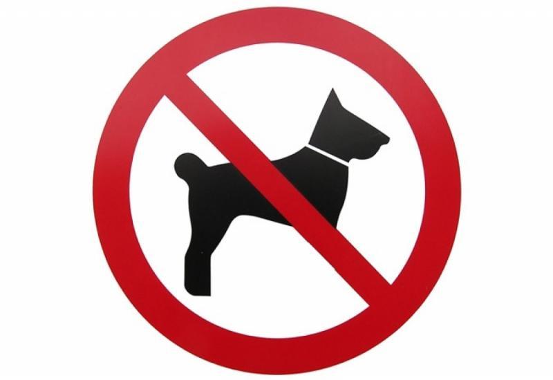 Вигул собаки в неналежному місці: суд покарав господаря тварини