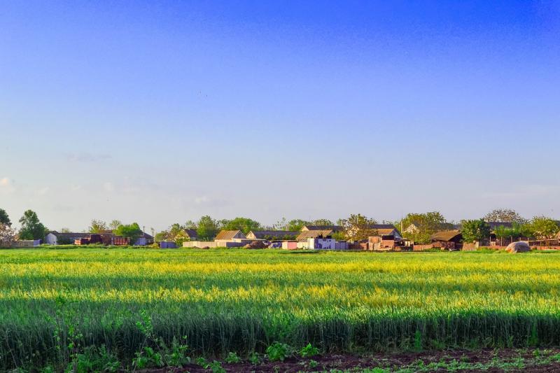 Фермерам дозволили орендувати польові дороги