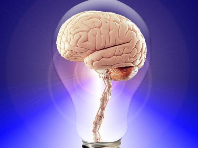 Вчені навчилися продовжувати життя мозку на 36 годин