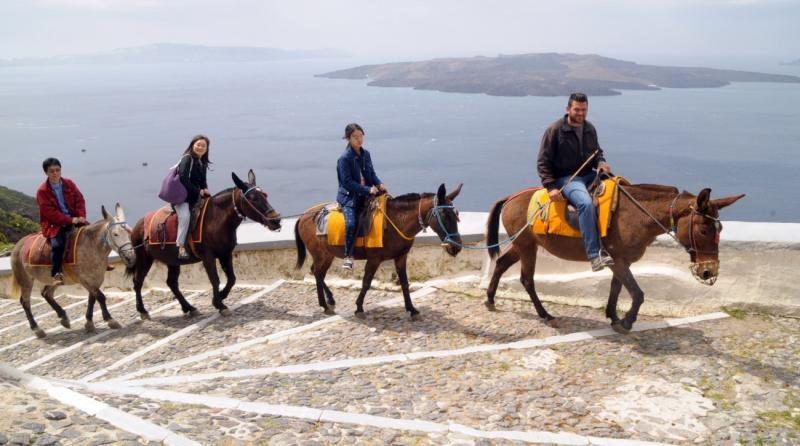 Владу грецького острова Санторіні звинуватили у жорстокому поводженні з віслюками