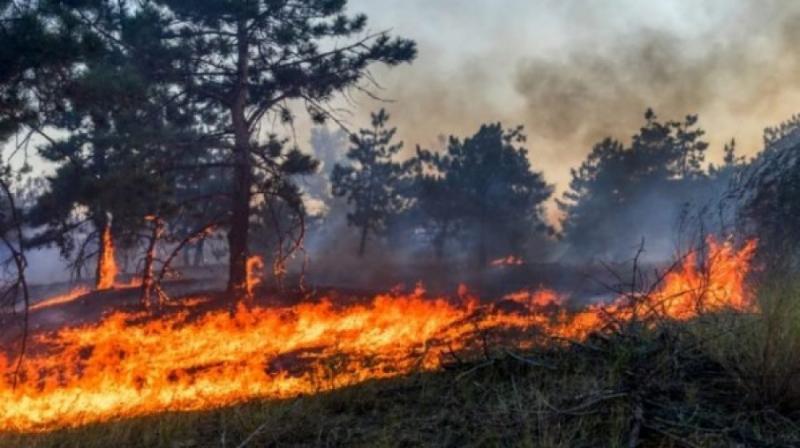 На Луганщині горить замінований ліс – є постраждалий