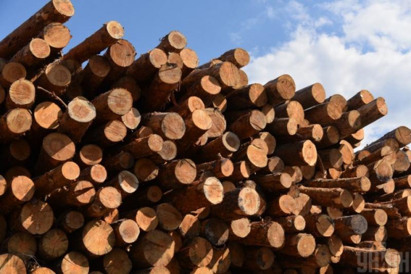 На Закарпатті викрили схему контрабандного вивезення лісопродукції за кордон