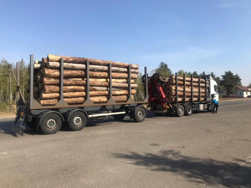 Посадовців ДП «Київоблагроліс» викрили на незаконному продажу деревини