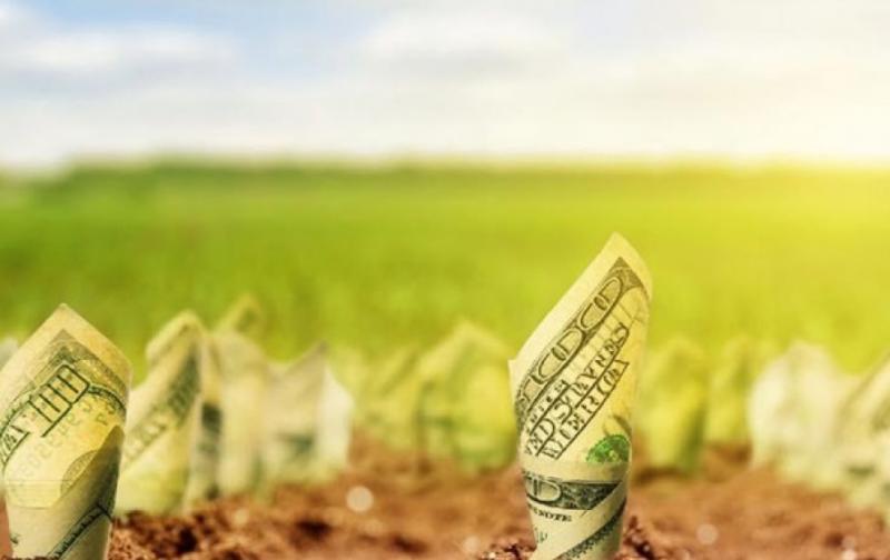 Фіктивні інвестиції і псевдоіноземці: Ринок землі на межі дефолту?