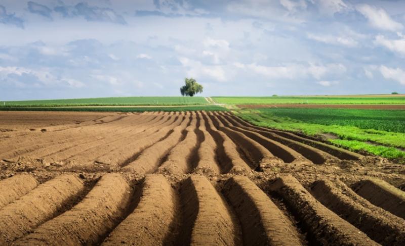 Зеленський доручив уряду подати законопроєкт про скасування мораторію на продаж землі до 1 жовтня
