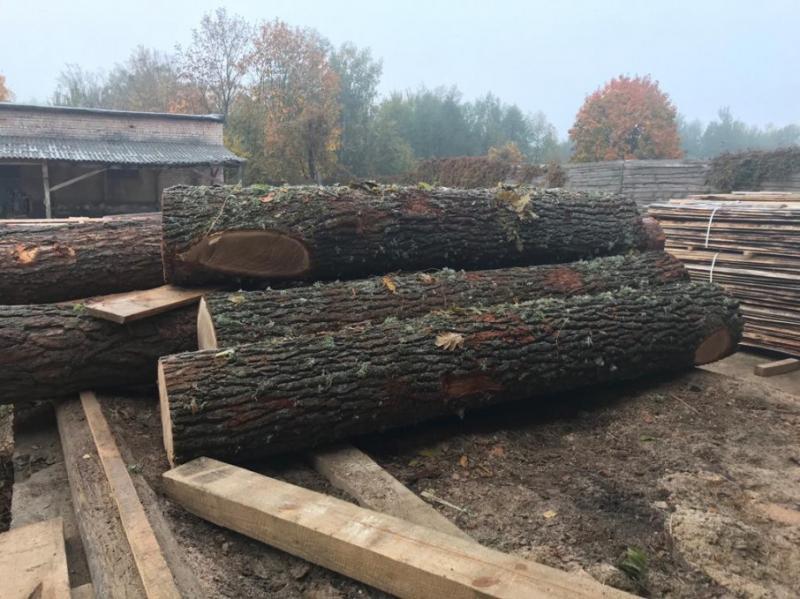 На Житомирщині виявили незаконно зрізану цінну деревину