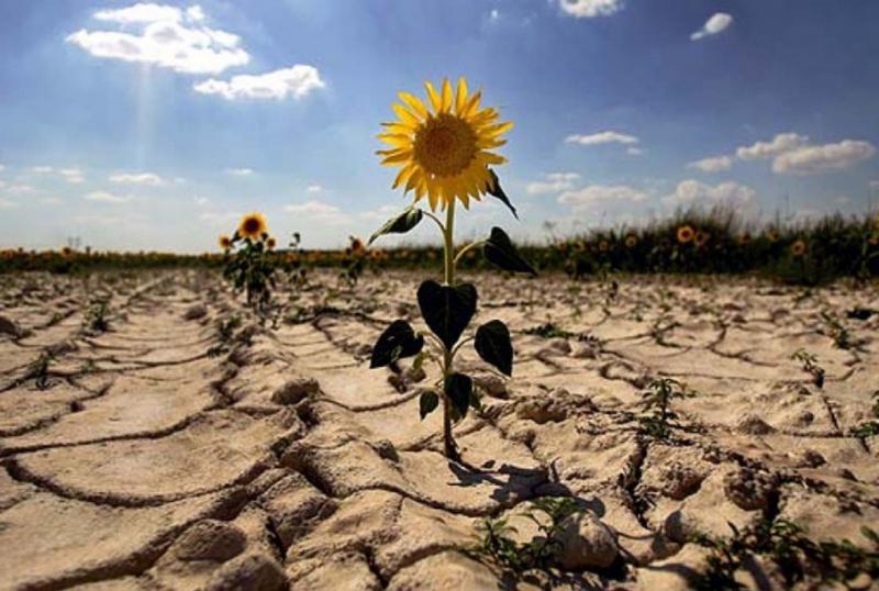 В Україні буде запущено систему моніторингу стану ґрунтів до травня 2020 року