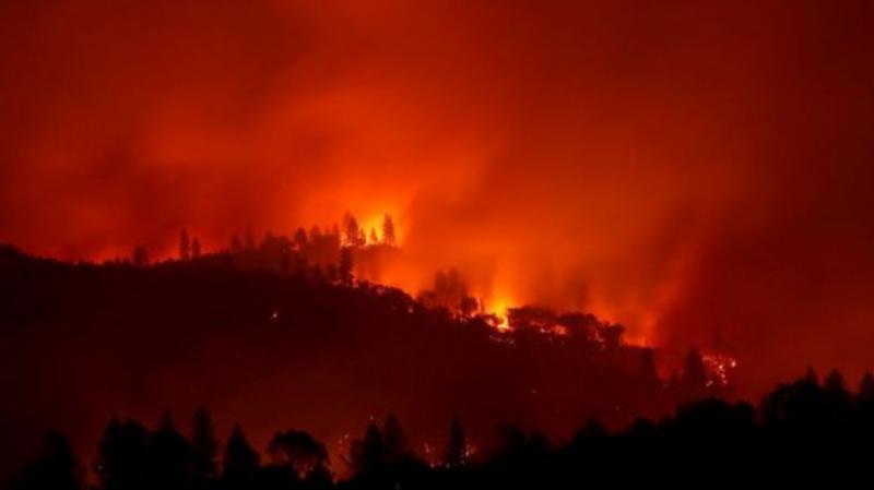 У Каліфорнії ввели режим НС через лісові пожежі