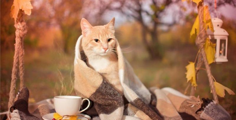 В Україну йде суттєве похолодання