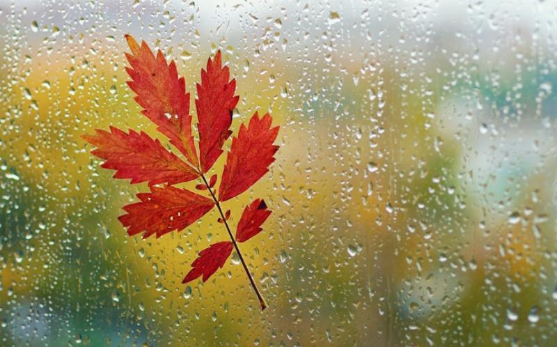 Погода на 7 листопада: В Україні дощитиме