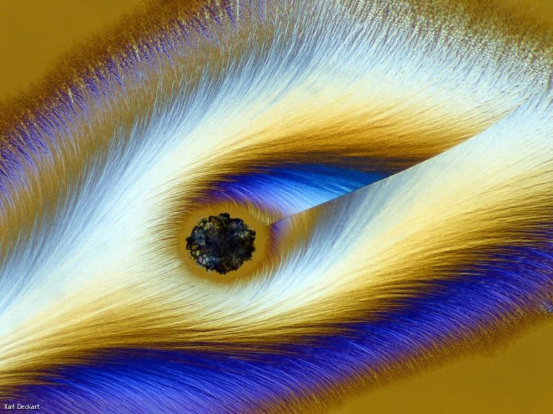 Дивовижні фото під мікроскопом: Від ембріона черепахи до личинки комара