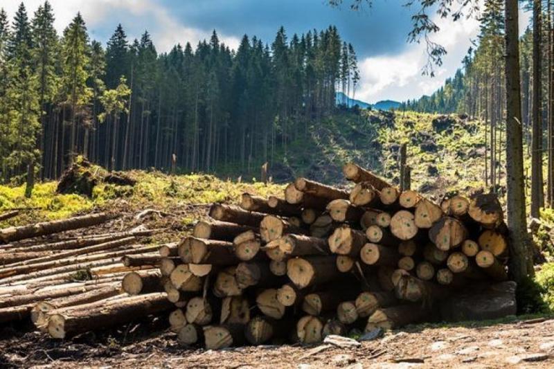 The Guardian: Вирубка лісів шкодить екології у 6 разів більше, ніж вважалося раніше