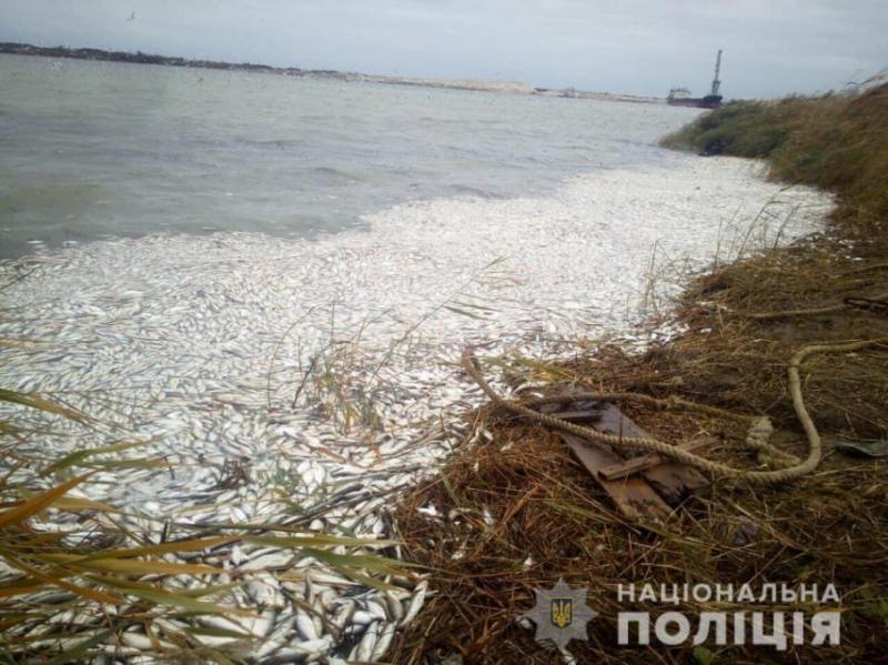 Поліція відкрила кримінальну справу через масову загибель риби на Херсонщині