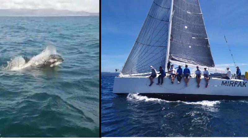Кити-вбивці пошкодили яхту ВМС Іспанії