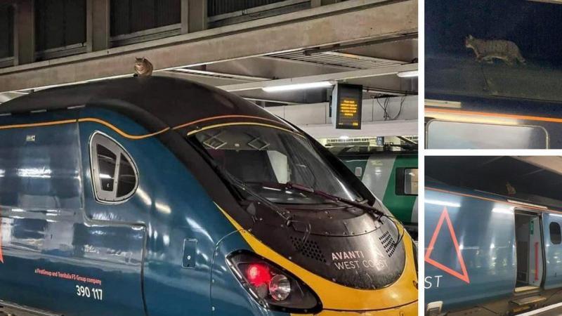 У Лондоні на 2,5 години затримали швидкісний потяг через кішку на даху