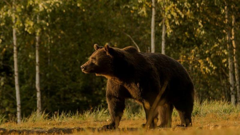 Принца Ліхтенштейну звинуватили у вбивстві найбільшого ведмедя в ЄС