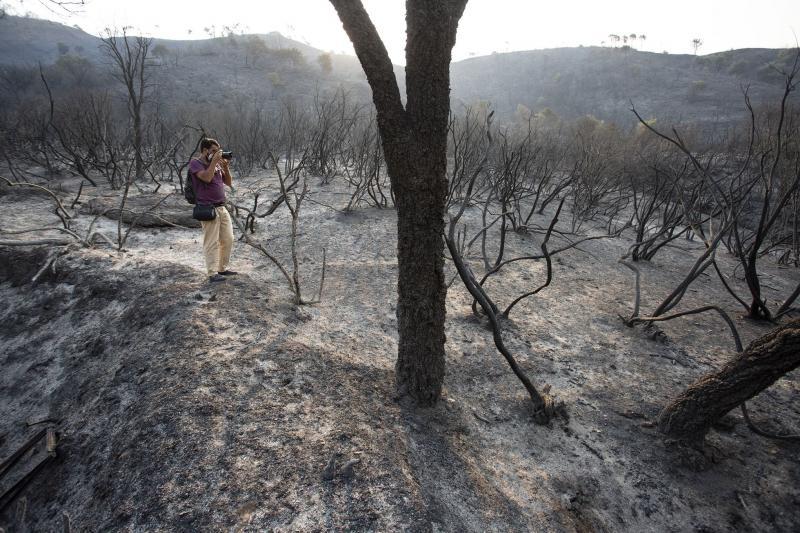 Пожежа на півдні Іспанії: є перші жертви, вогонь знищив 3600 гектарів